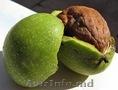 закупаем орех в зеленой кожуре неочищеный 5 лея Cumpăr nuci in coaja  la preț re