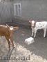 корова и два теленка