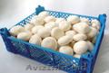 Оптовая продажа грибов: вёшанка,  шампиньоны белые,  королевские шампиньоны